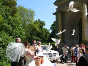 Hochzeitstauben auf Ruegen