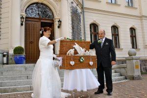 Taubenflug zur Hochzeit Ralswiek auf der Insel Rügen