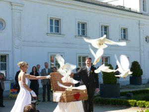 Taubenflug auf der Insel Ruegen